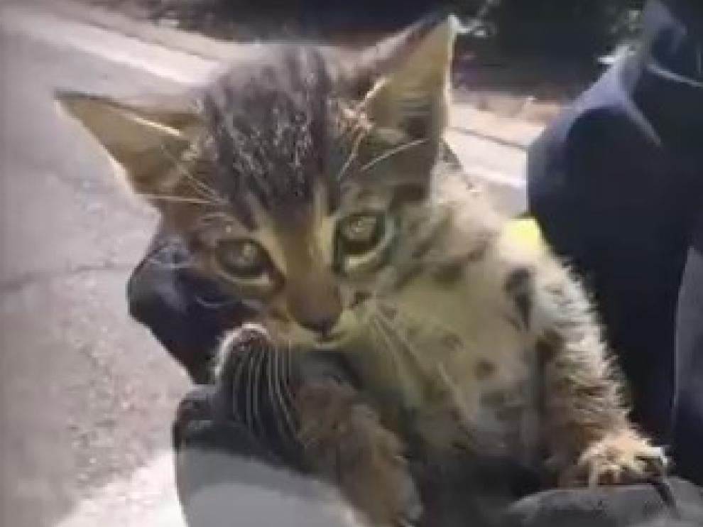 La Policía rescata un gatito y un cachorro de perro en Zaragoza