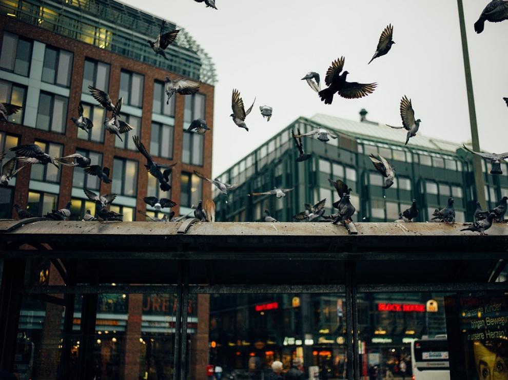 Foto de archivo de una bandada de palomas