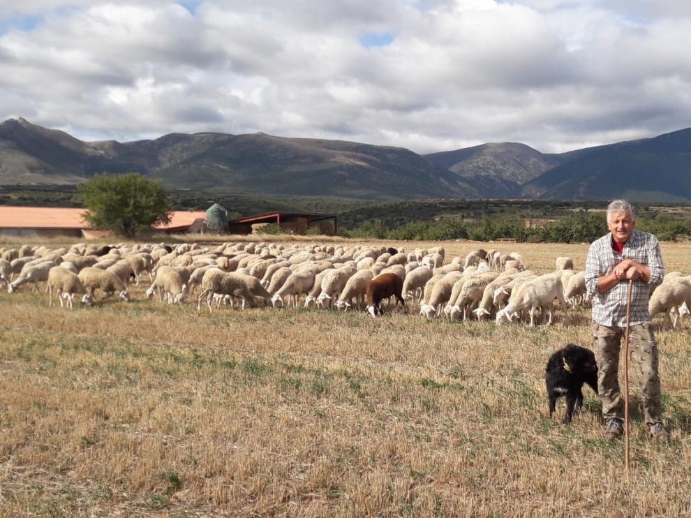 Jesús Melero al frente de su rebaño de Rasa Aragonesa, en un campo de su localidad natal, Alcalá de Moncayo.
