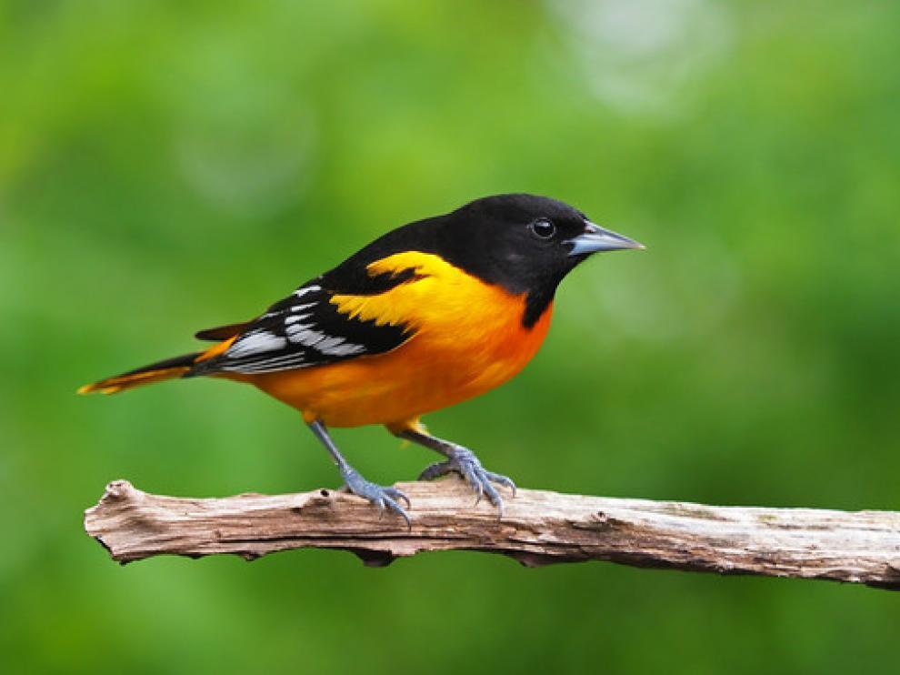 Los investigadores analizaron 529 especies y utilizaron datos de programas de monitorización recogidos a largo plazo en Estados Unidos y Canadá.