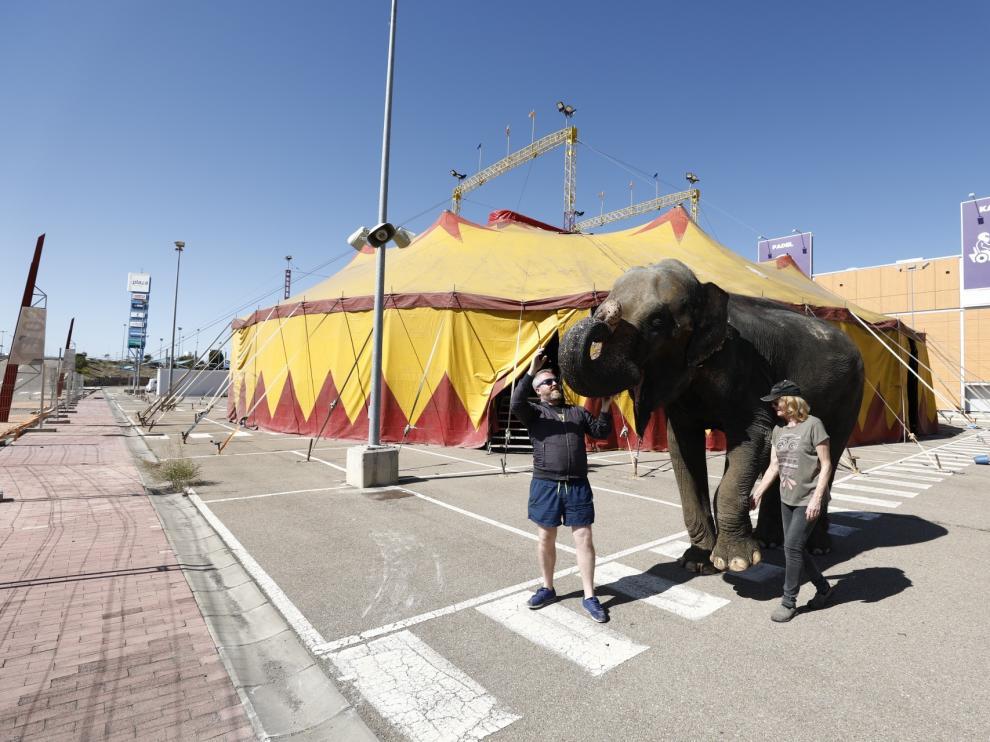 El elefante 'Dumba' ya está instalado en el aparcamiento exterior de Plaza Imperial.