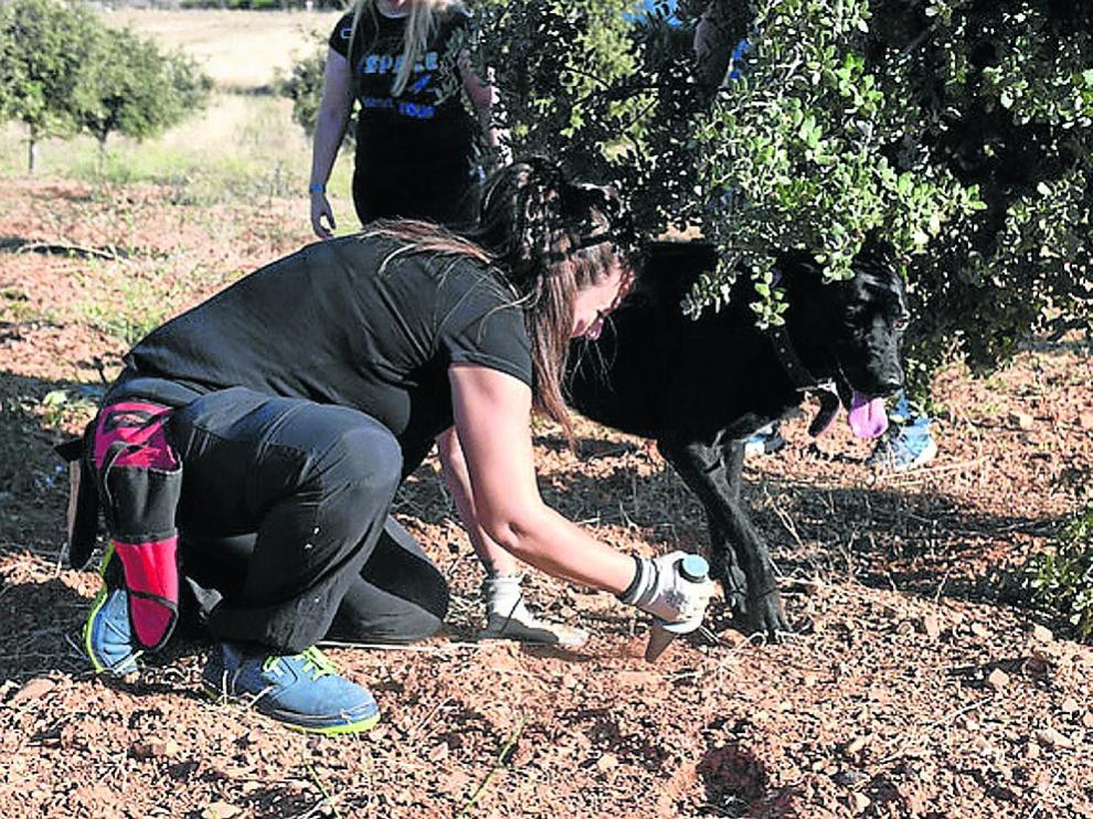 Trinidad Usón, junto a su perra Zarzamora, buscando trufas en sus plantaciones.