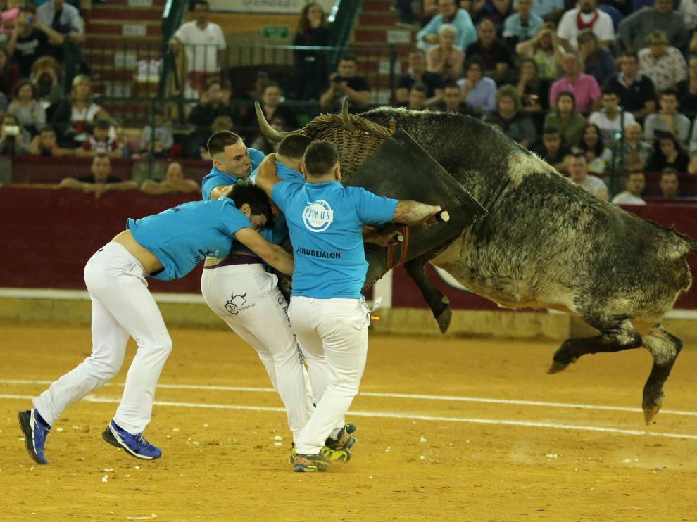 La vaca 22 Lisarda pega fuerte y arriba al cesto de Fuendejalón.