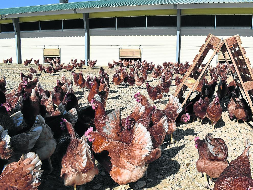 Instalaciones al aire libre donde se crían las gallinas de la cooperativa Los Monegros.