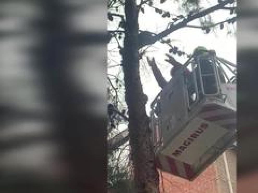 Los bomberos de Zaragoza intentan rescatar a un gato que subió a un árbol y ha permanecido 16 horas en el barrio de La Paz.