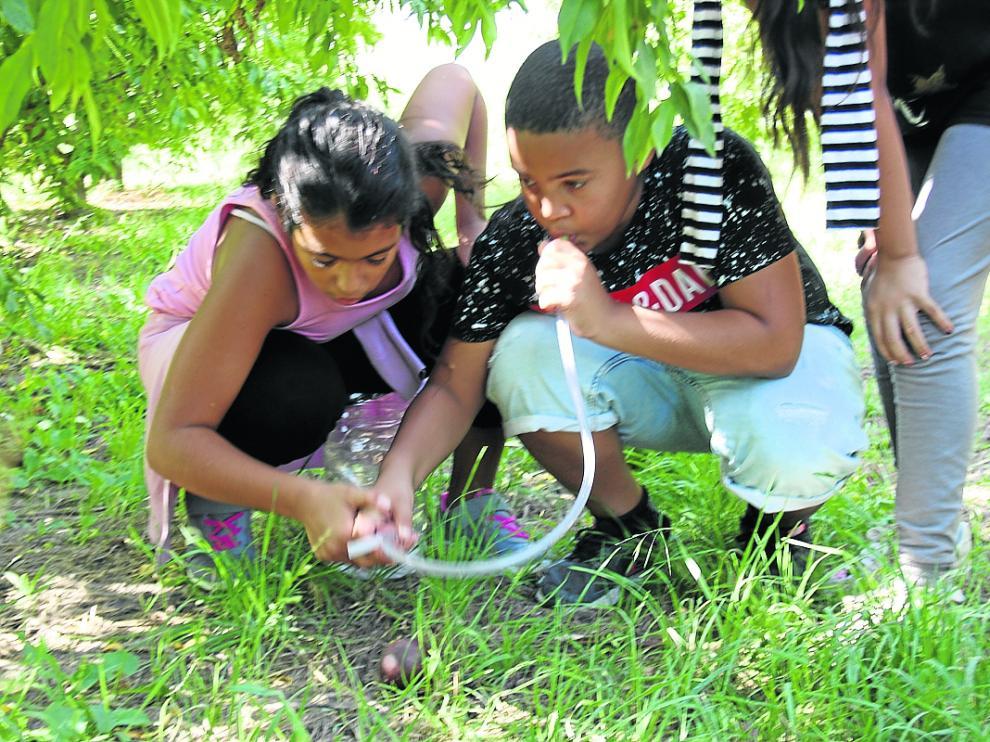Los escolares recogen las moscas, en los frutales, con la ayuda de un aspirador entomológico