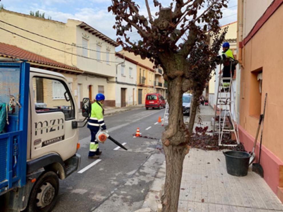 Operarios municipales ya han empezado con la poda en árboles pequeños.