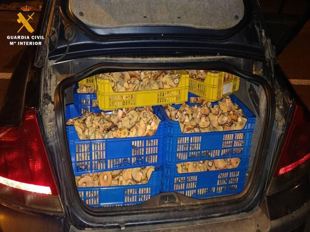 La Guardia Civil interviene 160 kilos de rebollones en un coche cerca de Casetas.