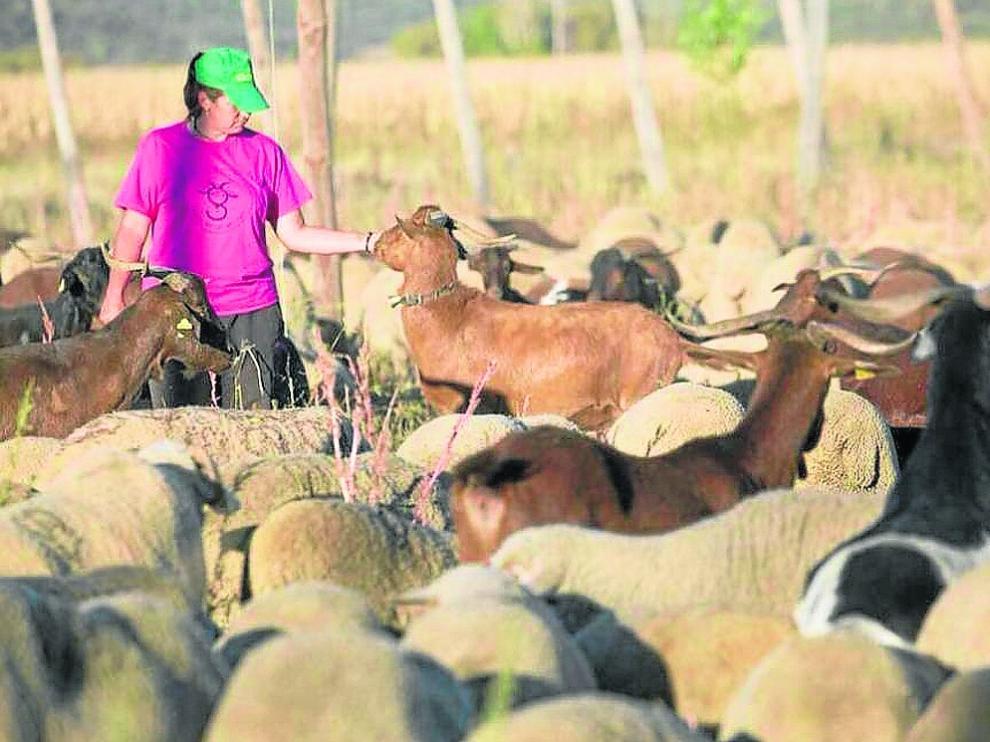 Una pastora, integrada en la iniciativa Ganaderas en Red, con su rebaño de ovino.