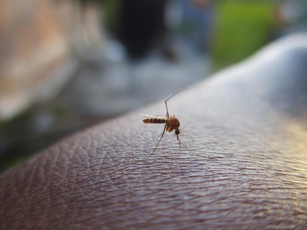 es una enfermedad causada por un virus que habitualmente se trasmite a través de la picadura de un mosquito.