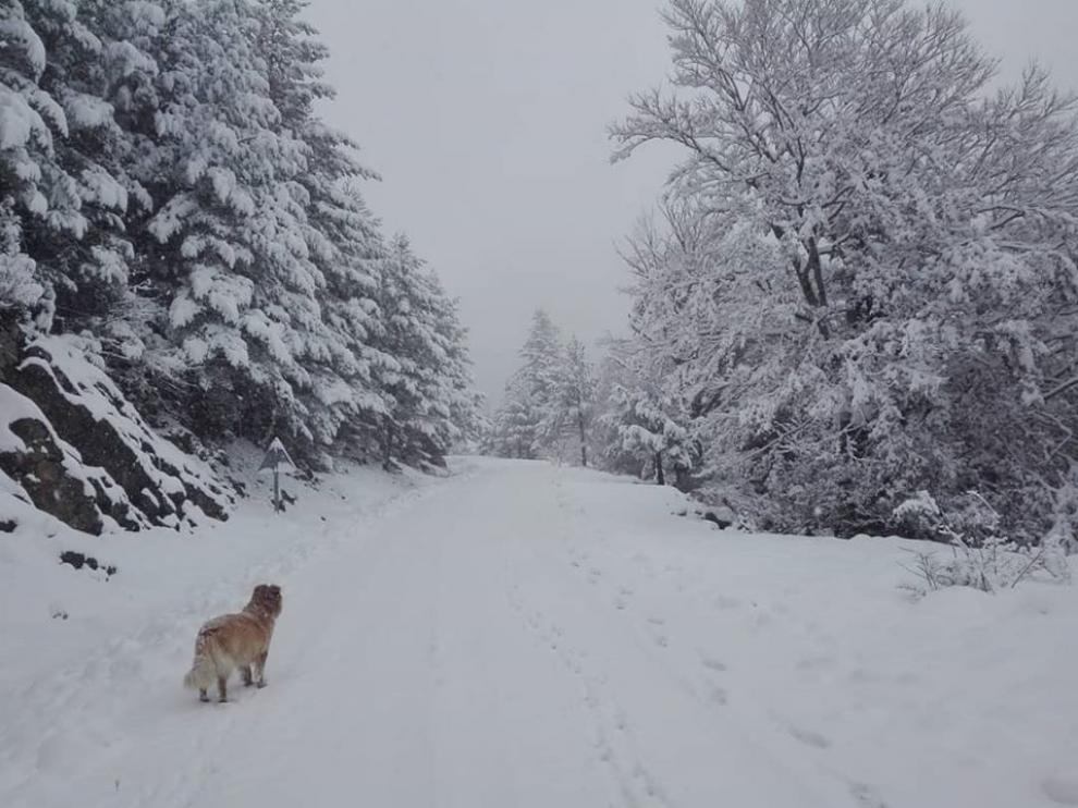 Imagen del entorno del refugio de Lizara tras las nevadas de estos días.