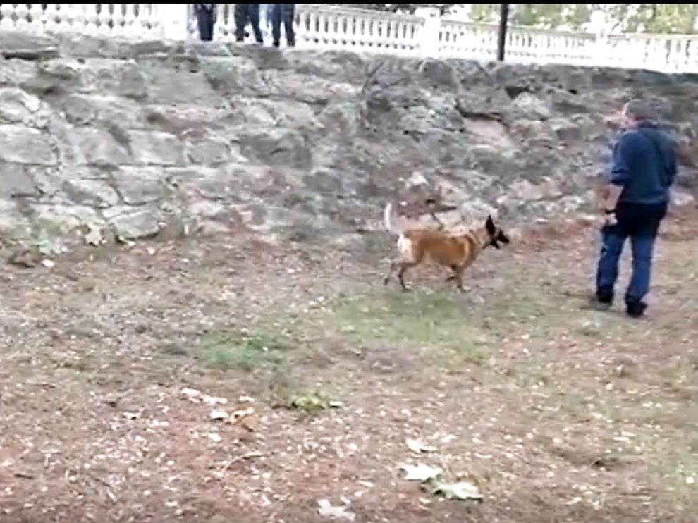 La Guardia Civil empleó un perro para detectar restos de sustancias en el parque de La Pinada