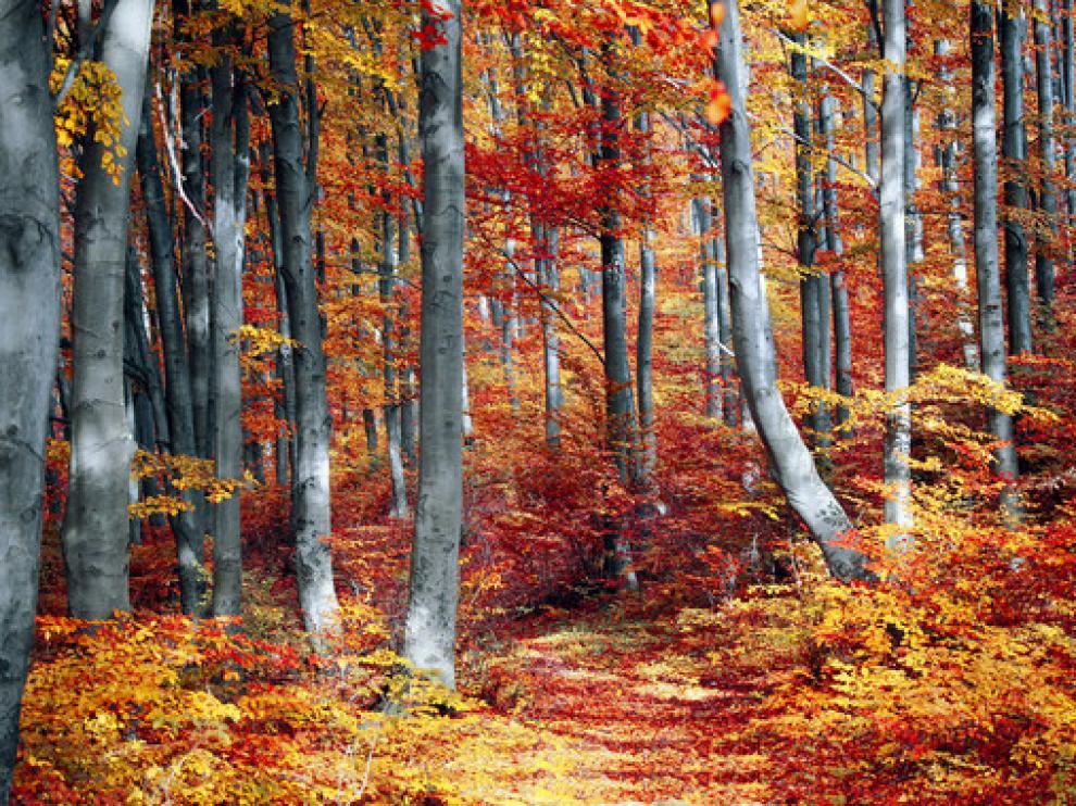 Los tiempos de permanencia del carbono en la vegetación se están acortando por factores como el calentamiento y las sequías.
