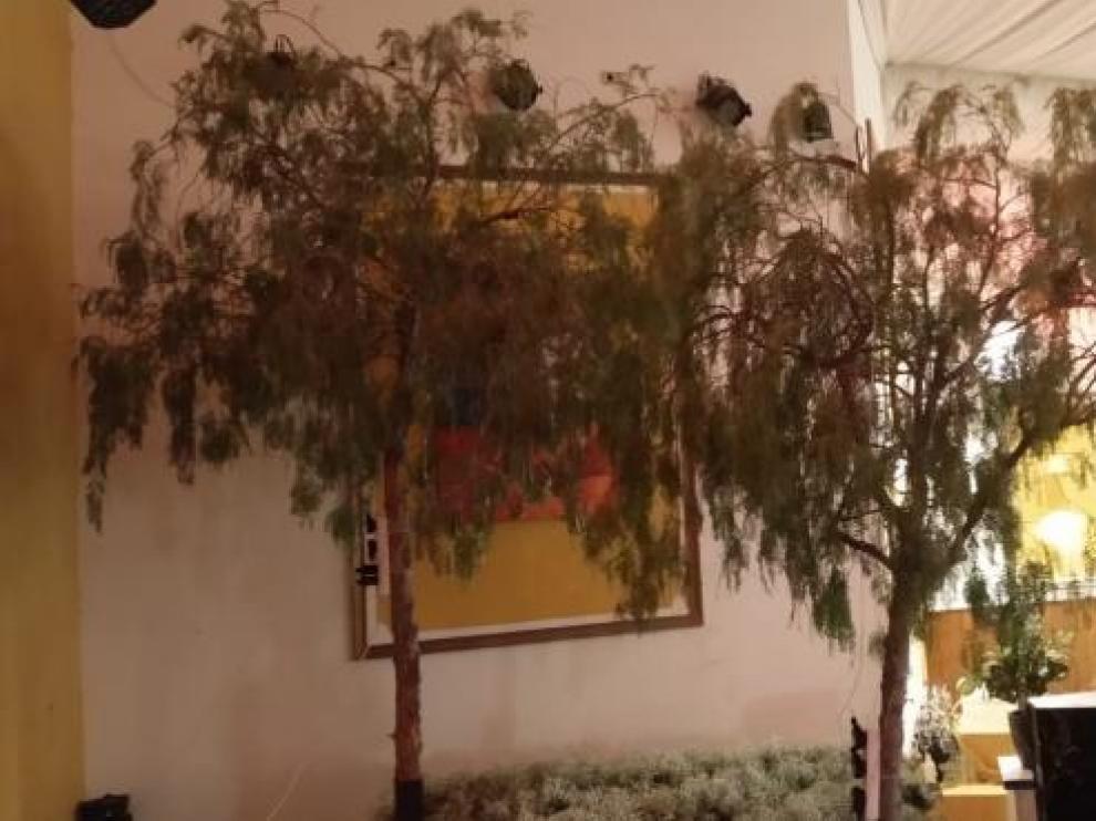 Los árboles sustraídos y valorados en 1.000 euros.