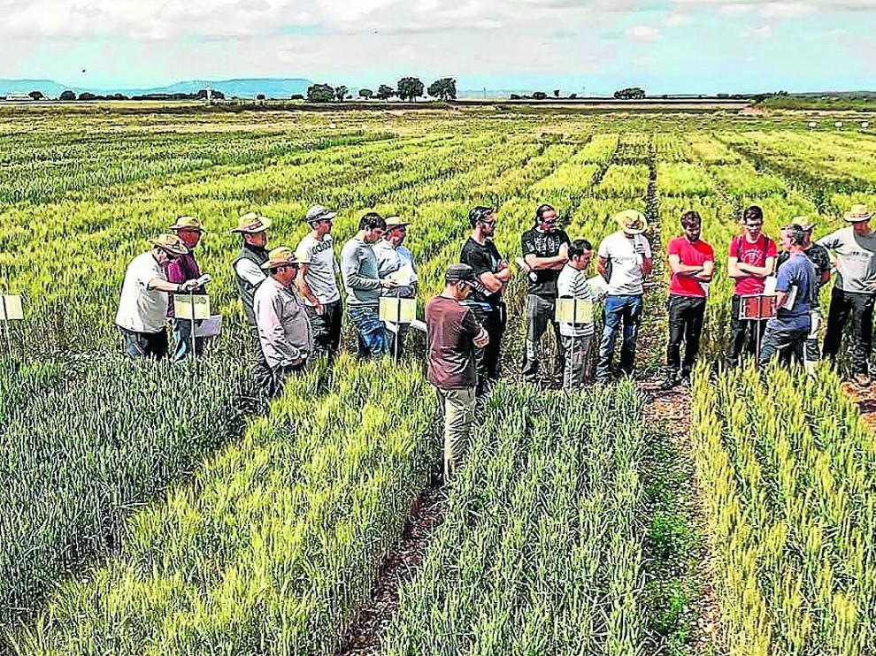 Jornada técnica de cereales organizada por la recién creada Red Arax en una explotación aragonesa.