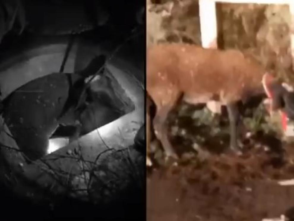 La Policía de Zaragoza rescata a una oveja de un pozo