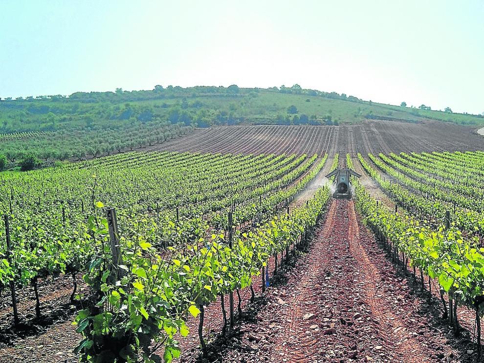 Campo en pleno proceso de tratamiento de las viñas.
