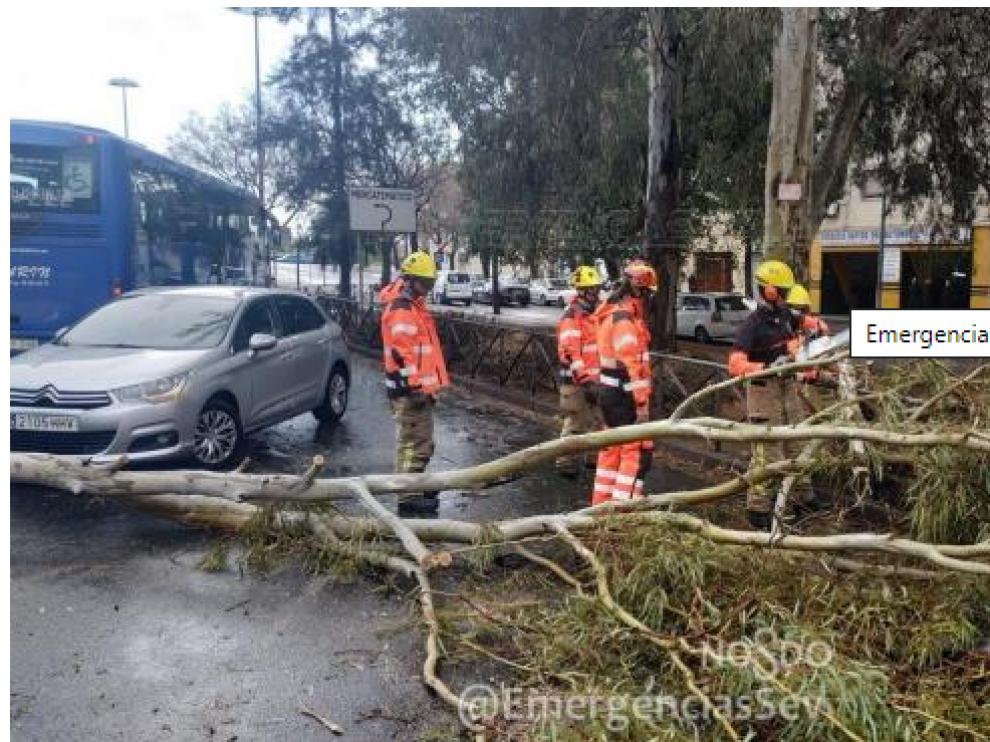 Imagen del momento en el que el personal de Emergencias Sevilla retira el árbol caído.