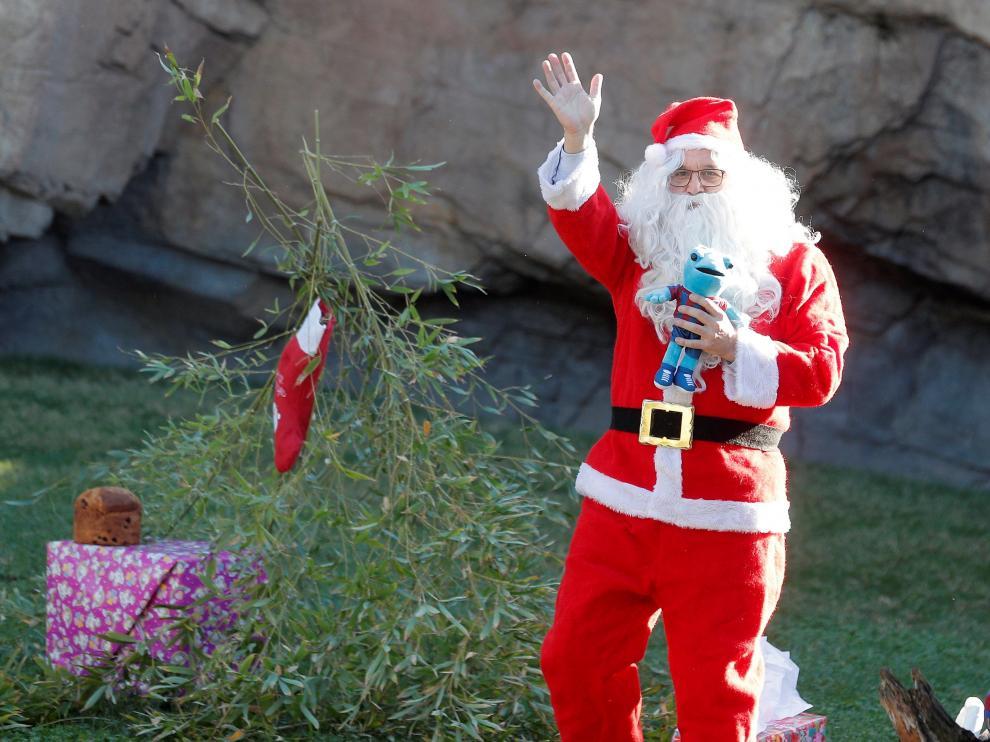 Un Papá Noel saluda desde el recinto de los chimpancés del Bioparc de Valencia.