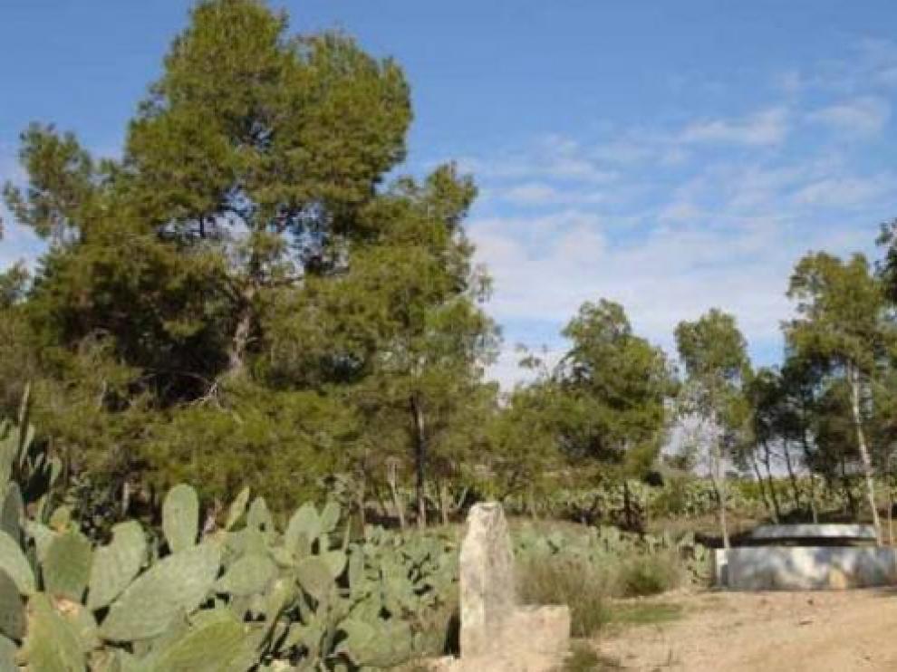 Aparece el cadáver calcinado de una mujer en un parque en Monteagudo (Murcia)