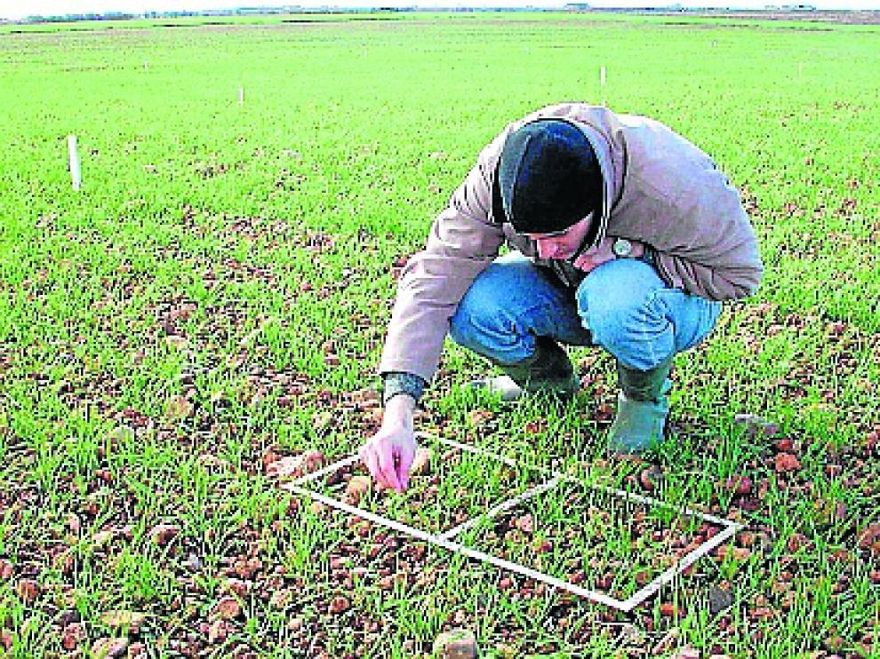 Un joven, que se ha incorporado accediendo a estas ayudas, examina la evolución del cultivo