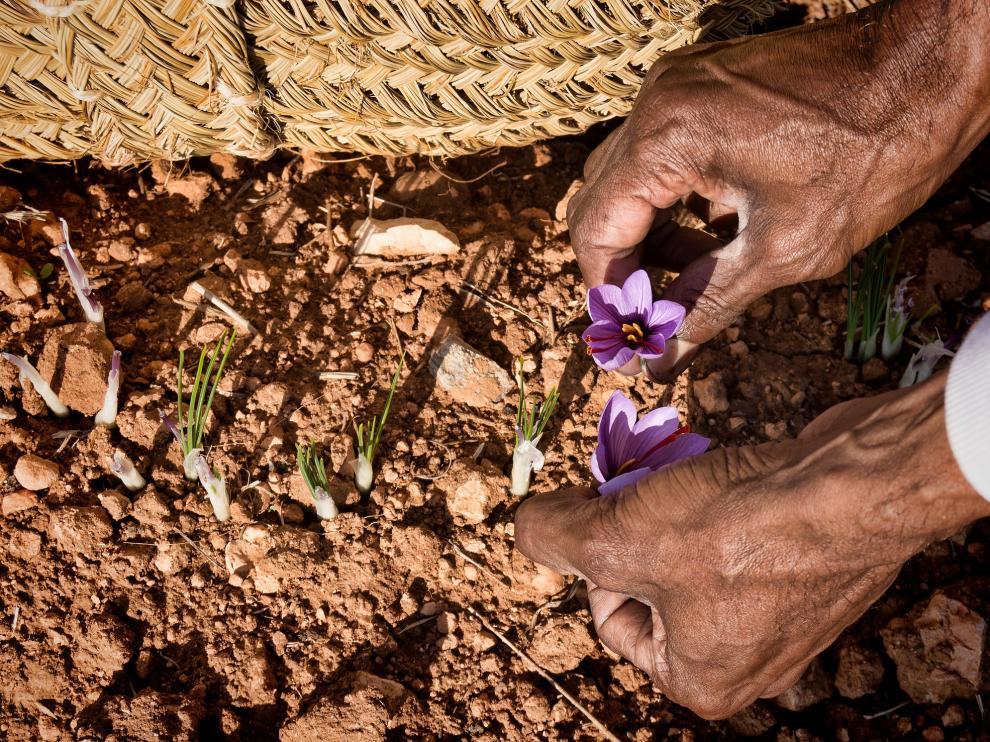 La imagen ganadora del certamen, titulada 'Recogiendo la flor', es de Antonio Suárez Vega.