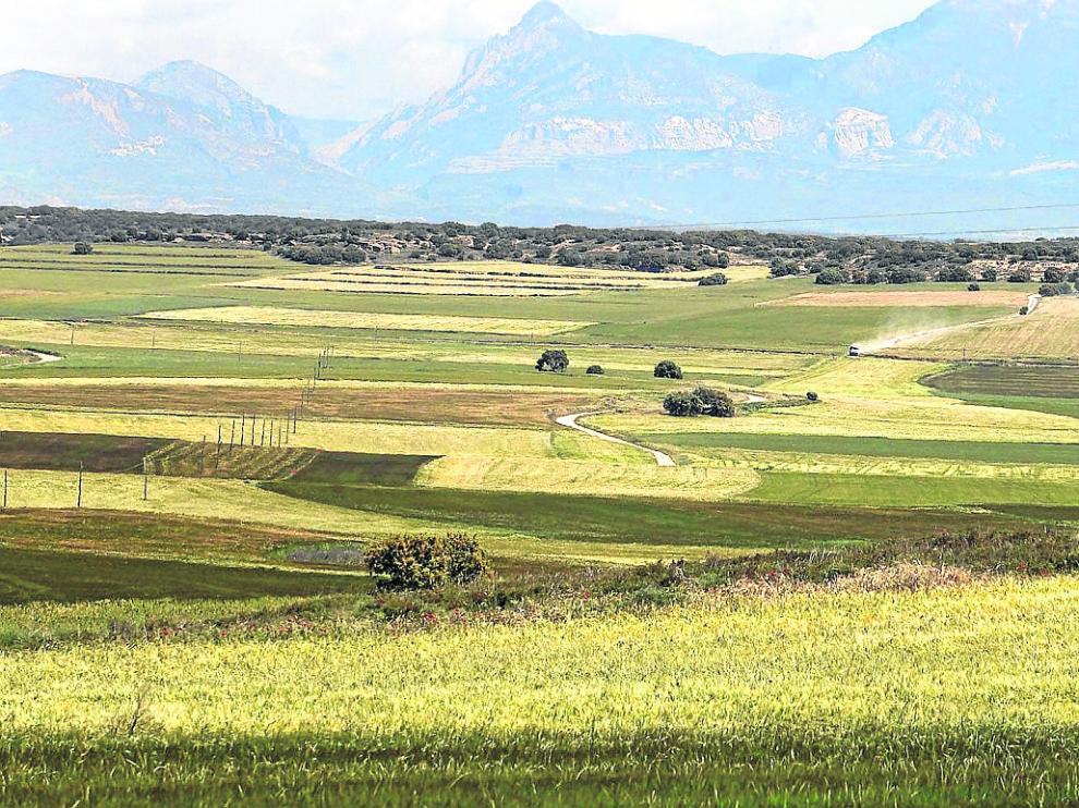 El proyecto va a trabajar con sistemas herbáceos extensivos de secano.