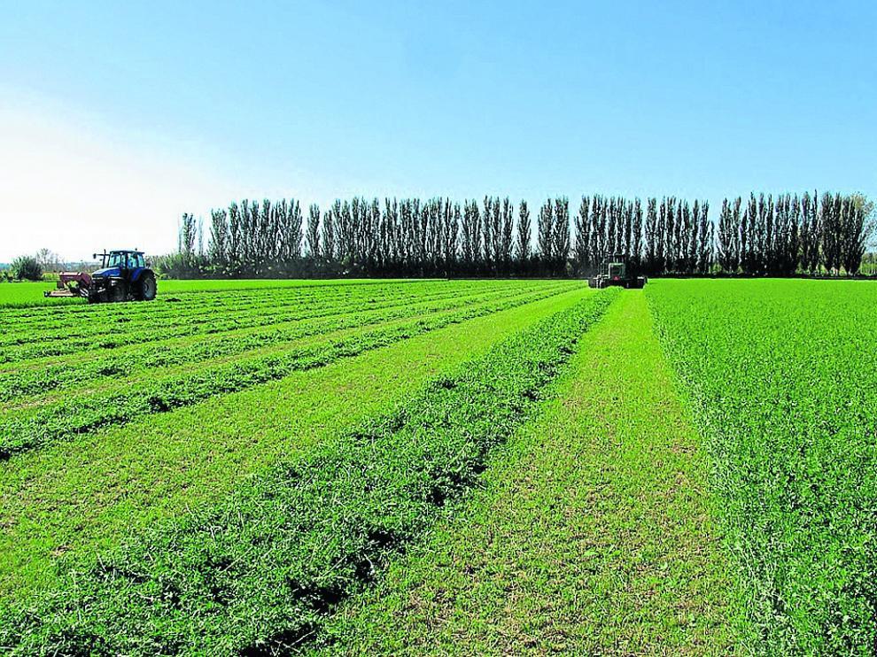 Recolección de alfalfa, una producción que ha ido conquistando los mercados más exigentes.