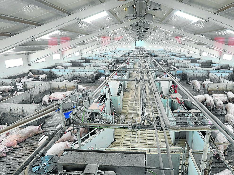 Nuevas de una nueva granja de porcino de Portesa en la localidad turolense de Singra.