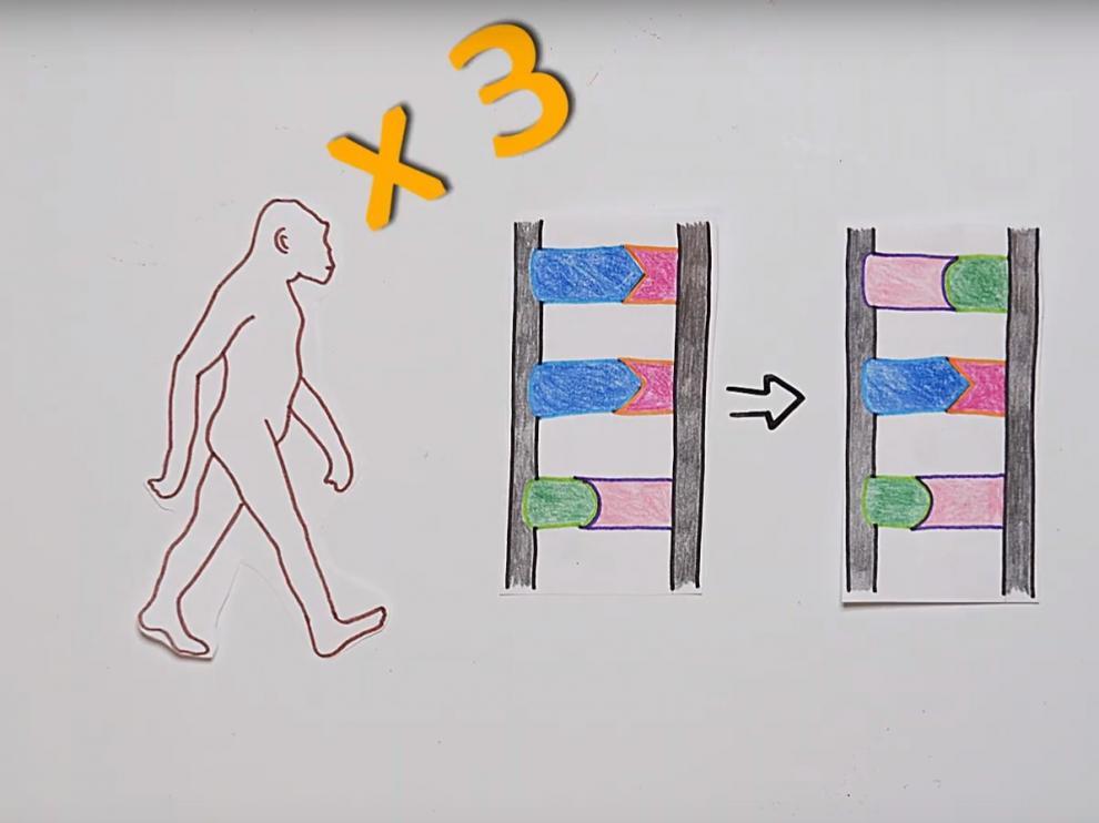 En algún momento de nuestra evolución, cuando nuestros ancestros ya andaban sobre dos patas, el cerebro empezó a cobrar aún más importancia