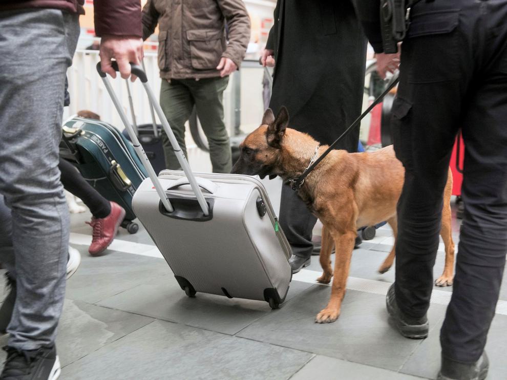 Unidad canina de la Policía Nacional.