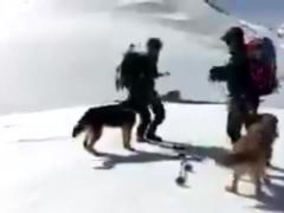 Estos compañeros de cuatro patas de la Guardia Civil de Huesca son especialistas en la búsqueda de personas desaparecidas en la nieve