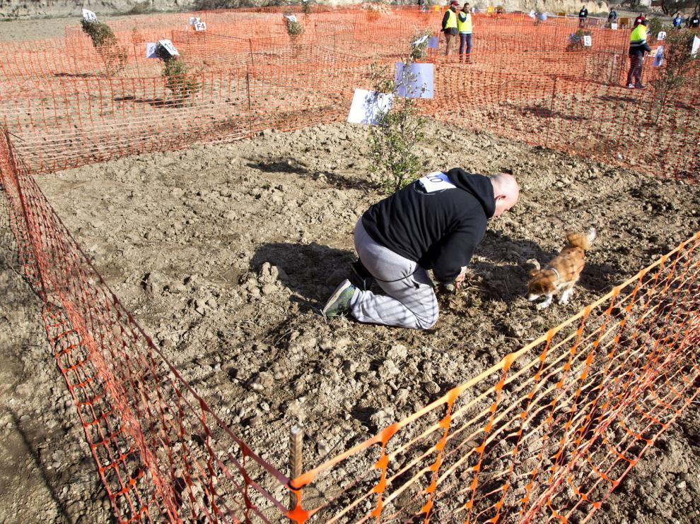 Los perros participantes tenían que encontrar ejemplares de tuber melanosporum.