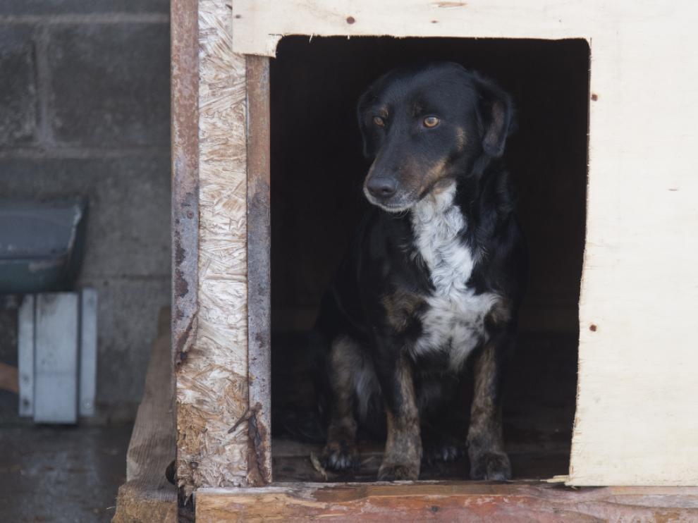 Uno de los perros que está actualmente en adopción.