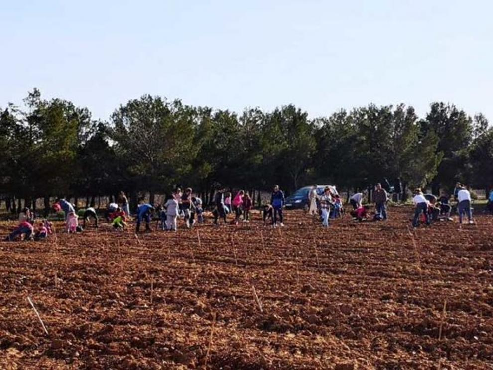 Empleados de Yudigar plantaron 600 árboles en el santuario de Lagunas.