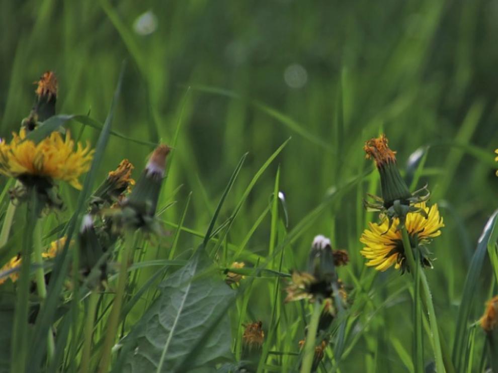 Imagen de archivo de un jardín.