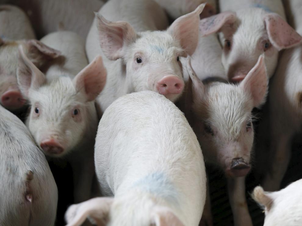Granja de cerdos en una localidad turolense.