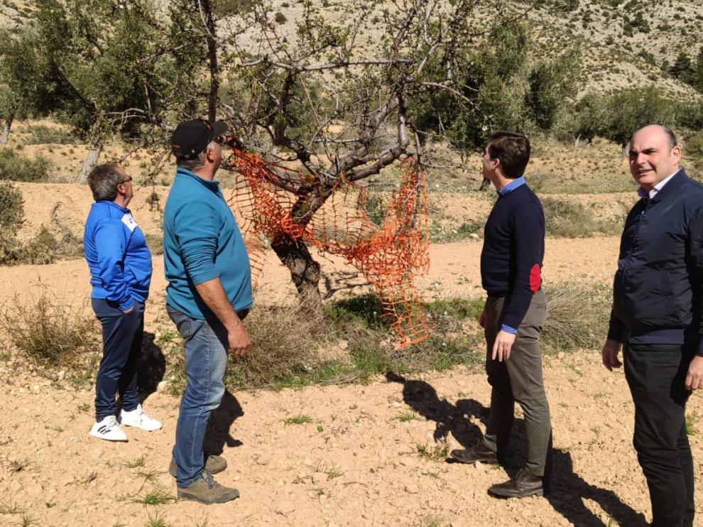 Dirigentes del PP visitan un campo para comprobar los daños en cultivos del Bajo Aragón causados por la fauna salvaje.