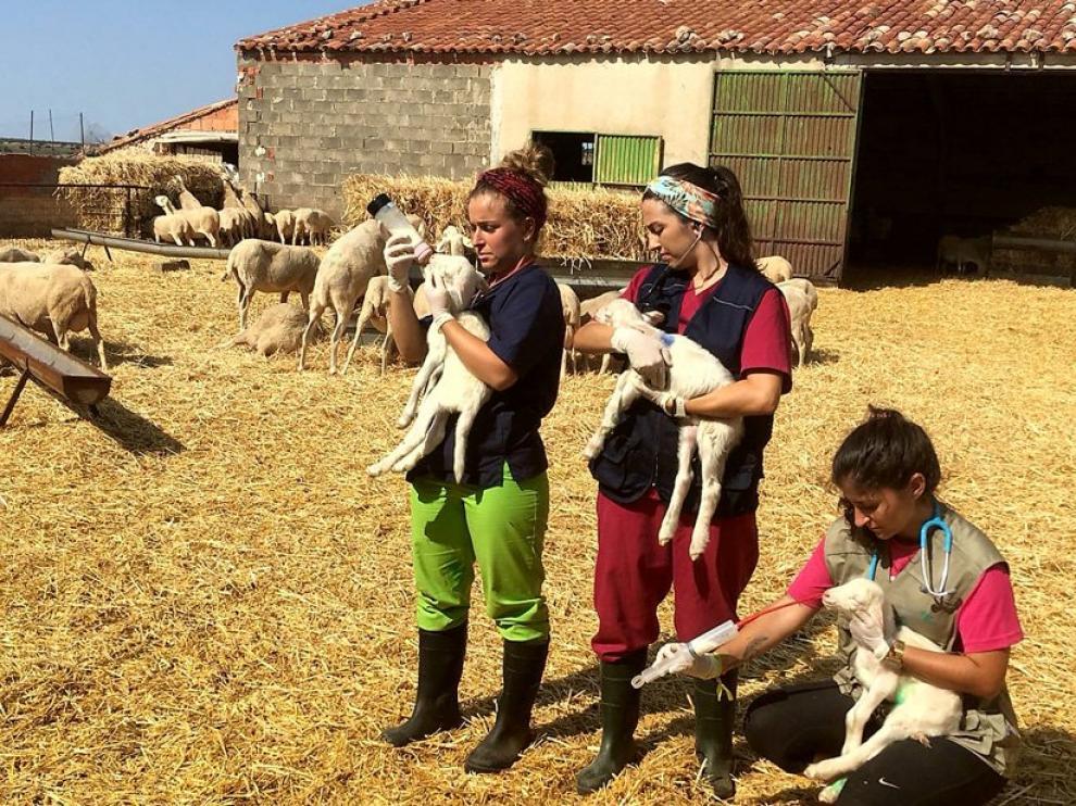 La DPZ triplicará este año el presupuesto del programa Desafío, el Erasmus rural, que impulsa junto a la Universidad de Zaragoza