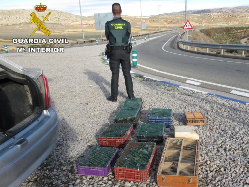 Localizados más de un centenar de pájaros protegidos en un maletero en Teurel.