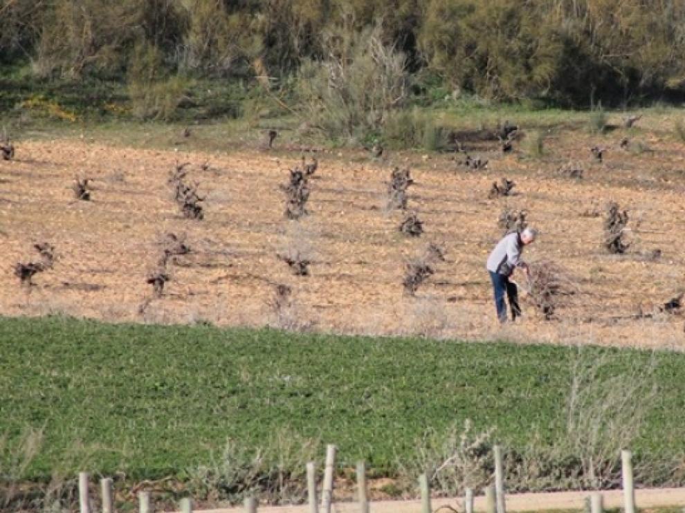 Un agricultor revisa el estado de su viñedo.