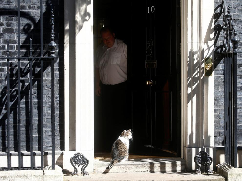 'Larry el gato', este domingo en el 10 de Downing Street, residencia del primer ministro inglés.