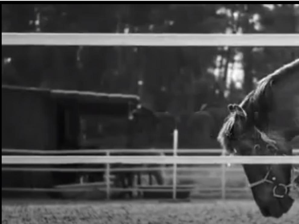 """""""Pasión por ti"""" es un vídeo que la Federación Hípica Aragonesa ha difundido para elogiar al caballo"""