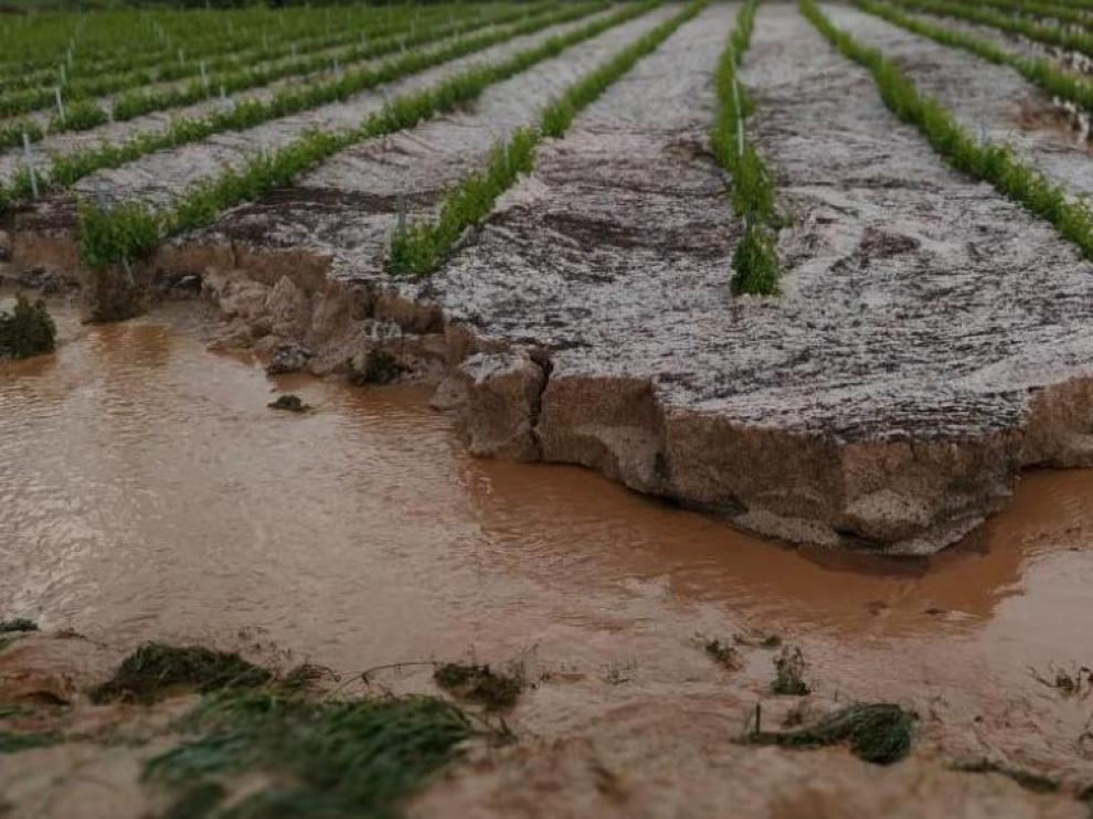 Granizada caída el pasado fin de semana en el viñedo de la comarca Campo de Borja