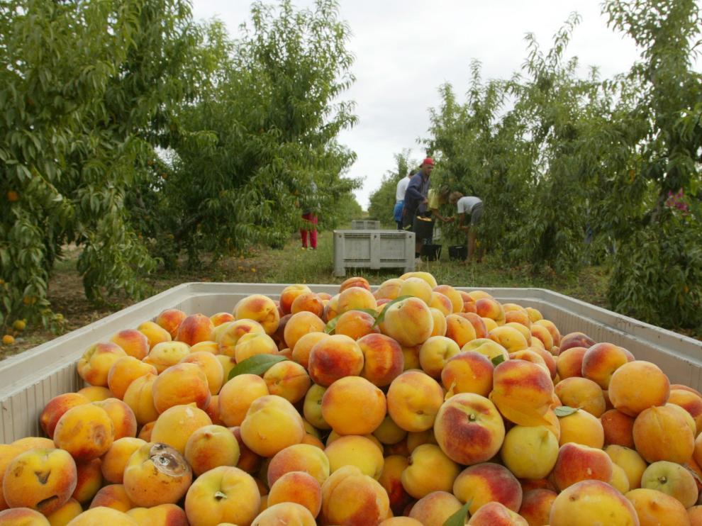 Imagen de archivo de la recogida de fruta en Aragón.