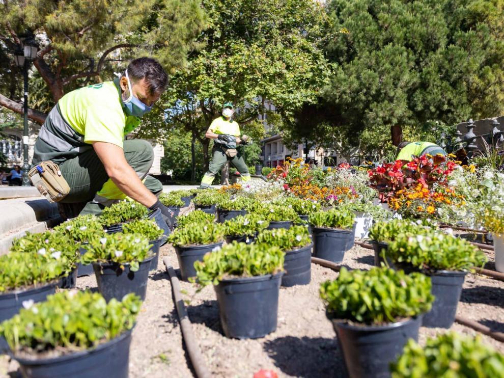 Jardineros colocan algunas de las plantas.