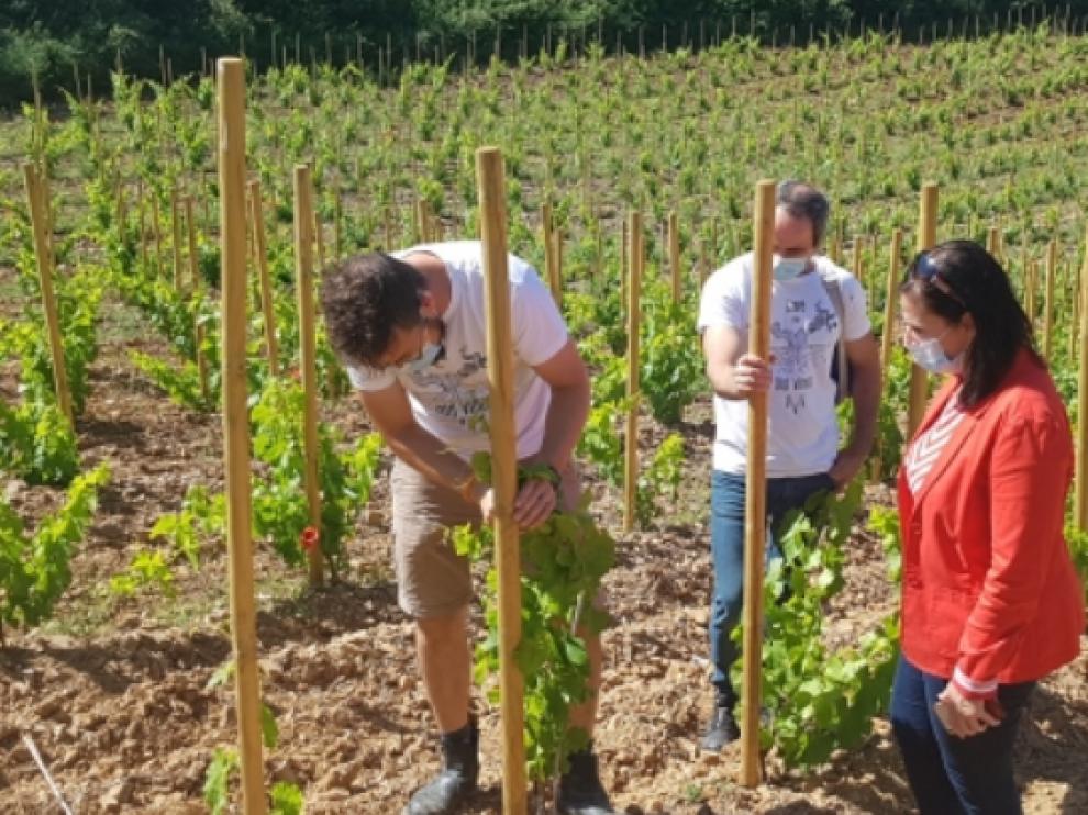 Estrategia de promoción 'Aragón, tierra de vino y talento' se pone en marcha