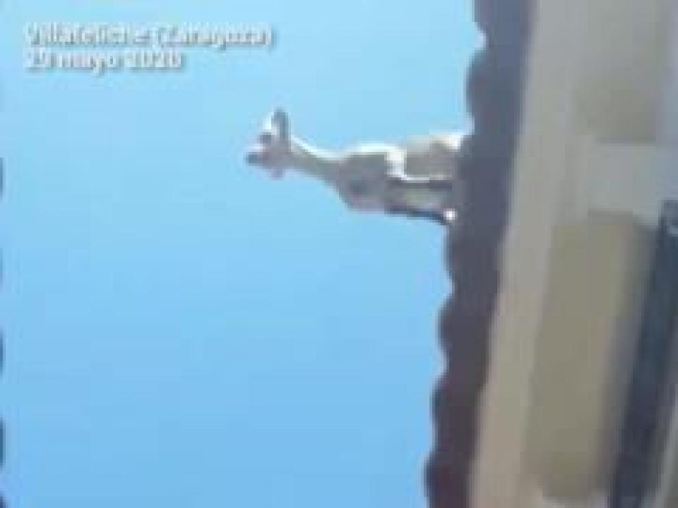 """Un grupo de cinco ejemplares de cabra montesa tiene en jaque a la localidad zaragozana. """"No hay explicación razonable"""", dice el alcalde."""
