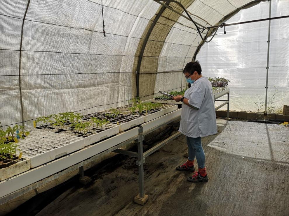 Los trabajadores han comenzado su vuelta a las instalaciones del Centro de Investigación y Tecnología Agroalimentaria