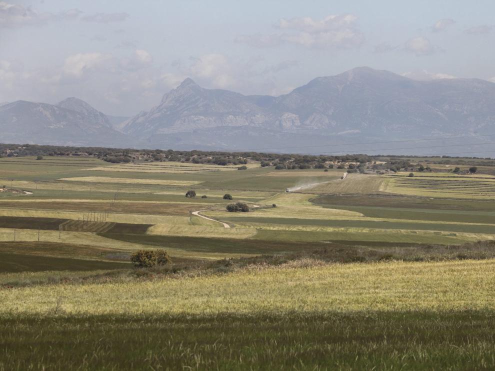 Campos de cereal en la Hoya de Huesca entre Albero Alto y Novales /Foto Rafael Gobantes / 7-5-14 [[[HA ARCHIVO]]]